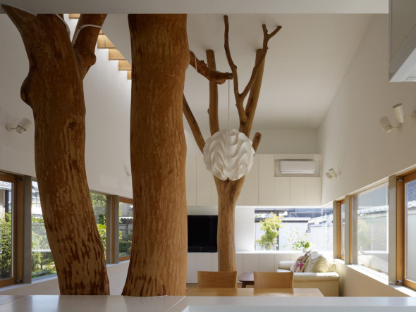 Árboles que habitan la casa