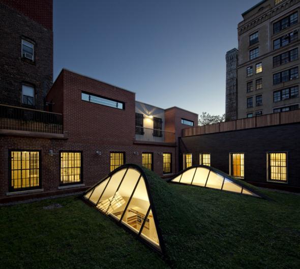 Pinceladas de plantas para remodelación de techos en Brooklyn