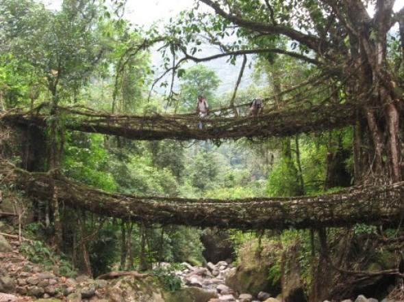 La naturaleza tiene sus propias técnicas estructurales, muy resistentes,  para considerarse en los diseños de jardines