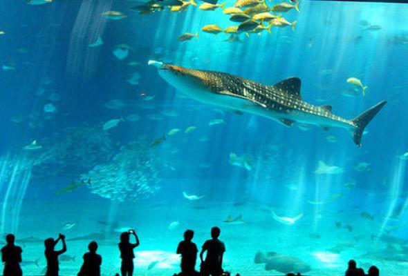El acuario más grande de latinoamerica casi listo