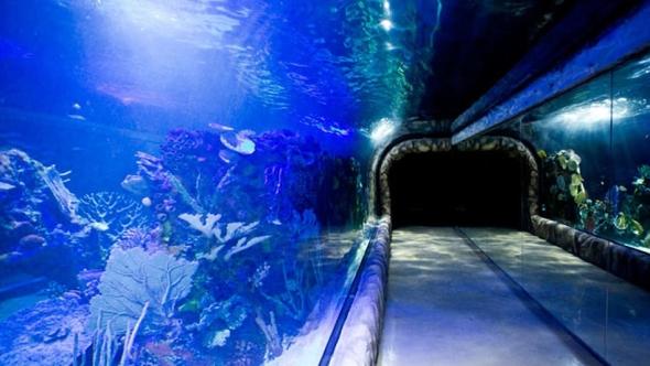 Aquarium Inbursa a fondo