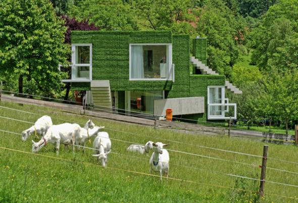 Casa surrealista de pasto