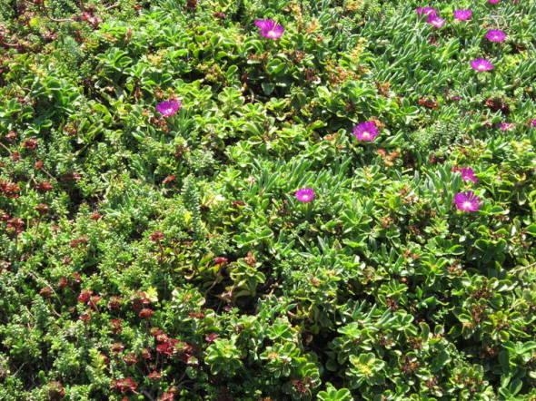 Nueve pasos para crear una terraza verde