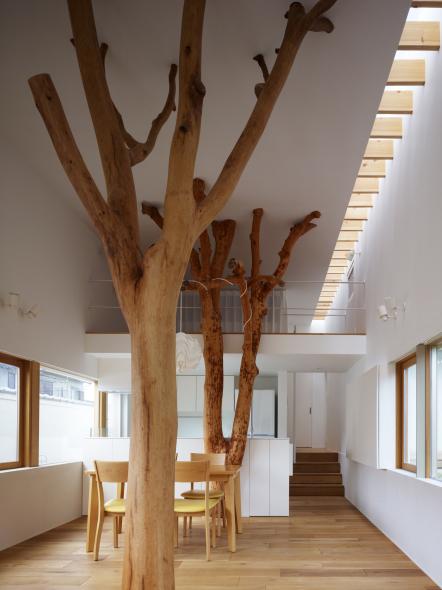 Árboles que habitan la vivienda