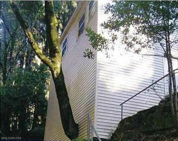 Humor en la arquitectura. Casa del árbol