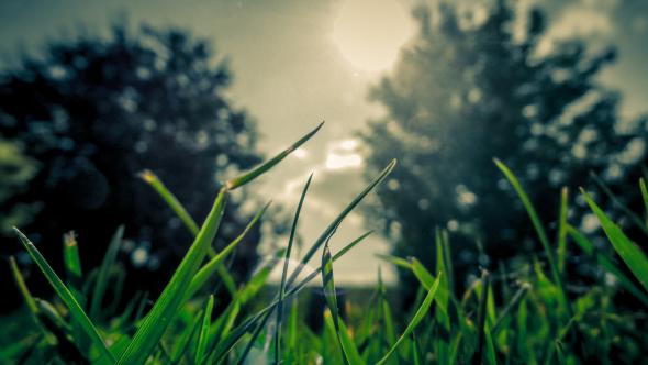 10 charlas TED sobre ecología y sustentablidad